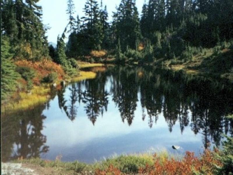 pond1plain.jpg
